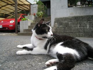 Cat081012_11
