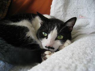 Cat081016_02