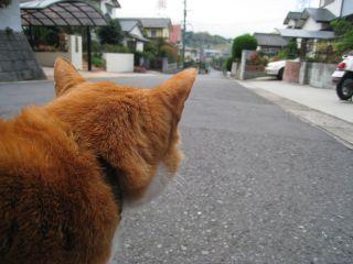 Cat081017_01_2