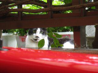 Cat081017_05