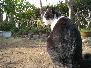 Cat090103_01