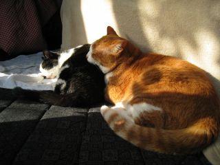Cat090104_01