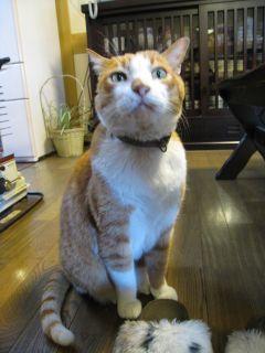 Cat090101_06