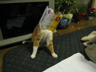 Cat090101_11