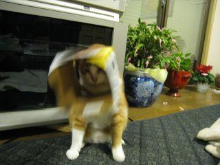 Cat090101_12
