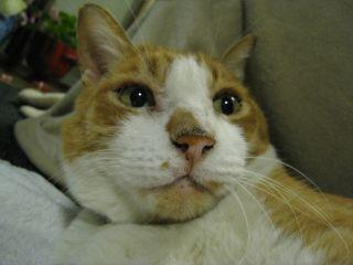 Cat090101_13