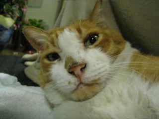 Cat090101_14