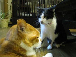 Cat090102_07