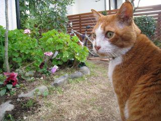 Cat090103_02
