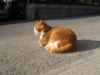 Cat090103_05