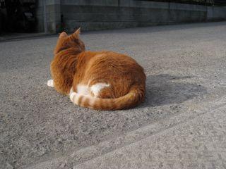Cat090103_06