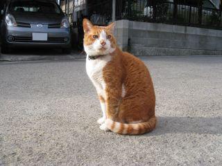 Cat090103_07