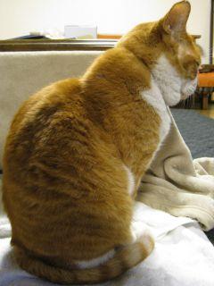 Cat090103_09
