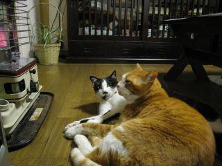 Cat090103_16
