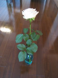 Garden090125_01