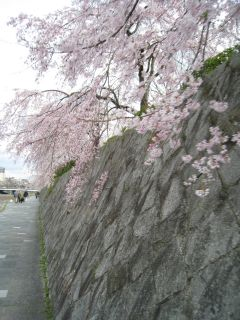 Kyoto090328_03