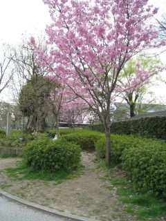 Kyoto090328_20
