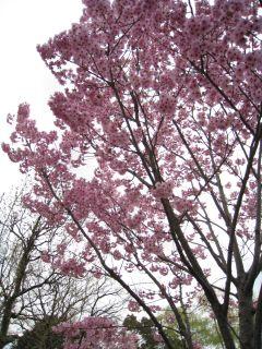 Kyoto090328_21