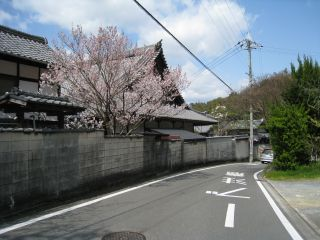 Kyoto090329_01