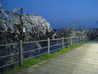 Kyoto090401_05