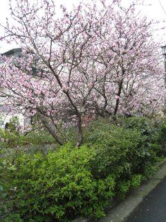 Kyoto090404_09