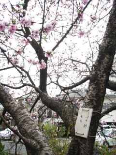 Kyoto090404_10