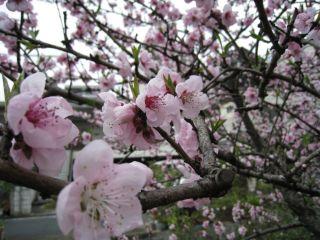 Kyoto090404_11