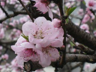 Kyoto090404_12
