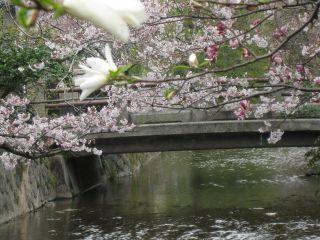 Kyoto090404_13