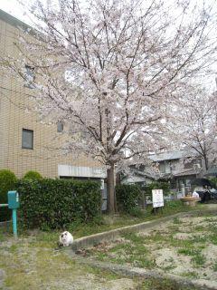 Kyoto090404_14