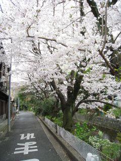 Kyoto090404_15