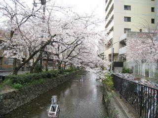 Kyoto090404_16