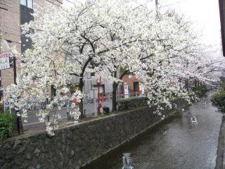 Kyoto090404_17