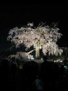 Kyoto090408_39