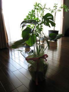 Garden090415_01