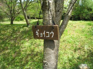 Ishiyama090411_04