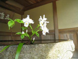 Ishiyama090411_12